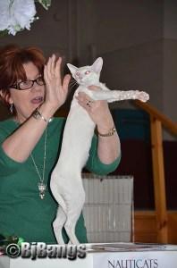 2013 NauTICAts Cat Show (37)