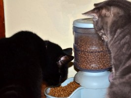 Lenny and Pink Collar try out Hill's Grain-Free Cat Food. They like it.