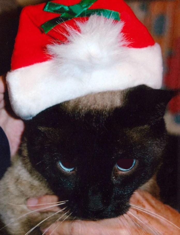 Linus in Santa hat
