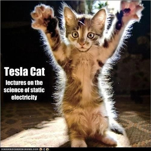 Static Electricity in cat's fur easily charged - Paws for