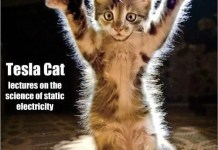 Static Electricity and Cats