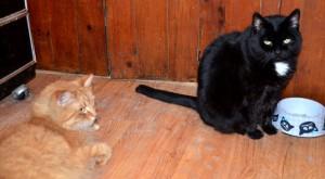 Kitties want more food! No wonder we gain weight.