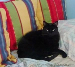 Kitty Vega loses 3 pounds