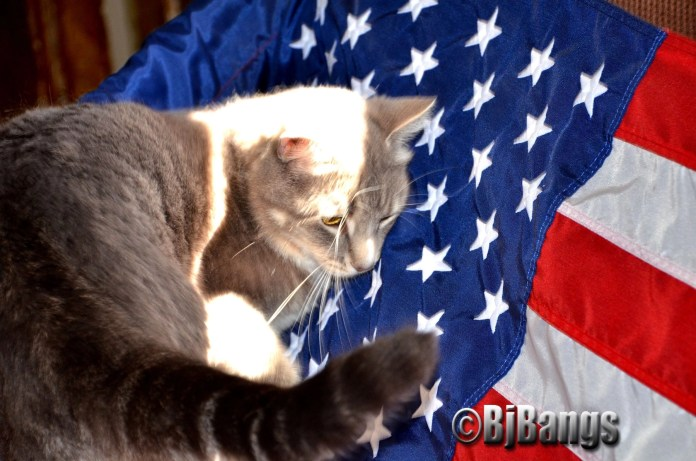 Cats are good for veterans and everyone for that matter.