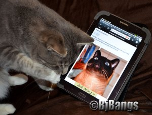 Kitty Lenny checks out the tablet.