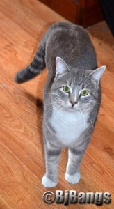 Kitty Lenny stops to pose for the camera.