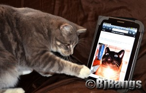 Kitty Lenny wants to play with Linus, the cat pictured on the tablet.