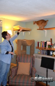 Lisa K coaxes cat to jump so the visiting reporter can get a better picture of what the cat walk is all about.