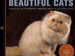 Beautiful cats is a great gift idea for the cat people in your life.