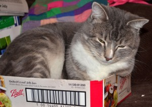 Kitty Lenny loves sleeping in boxes.