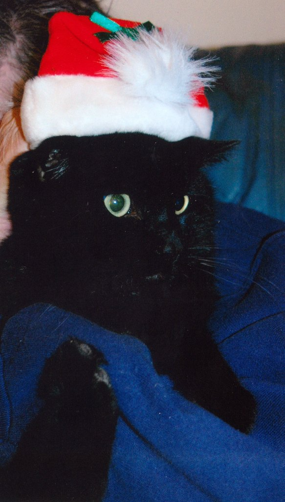 Kitty Tubby looks absolutely  handsome in his Santa hat.