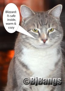 Blizzard 2015: Better for cats to be safe inside