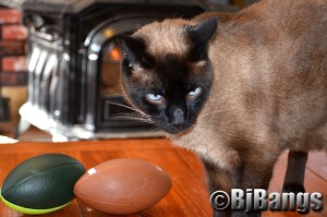 I, cat, did not deflate this football!