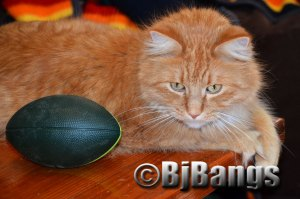 Do you suppose kitty stared the air out of the football?
