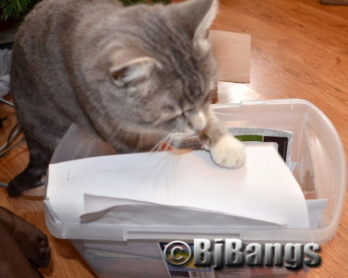 Tabby cat Lenny helps sort through documents, helping his mum prepare for taxes