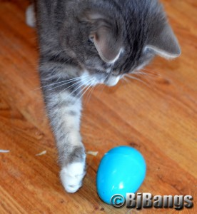 Kitty Lenny plays with an Easter egg.