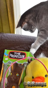 Kitty Lenny checks out chocolate Easter rabbit.