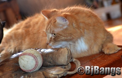 Cat is ready to play baseball