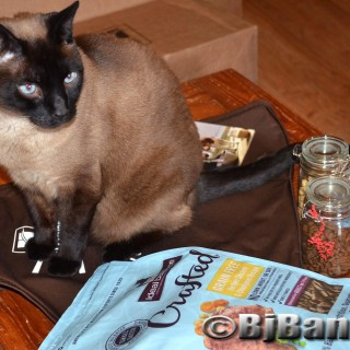 Siamese Cat Linus checks out new Hill's Ideal Balance Crafted