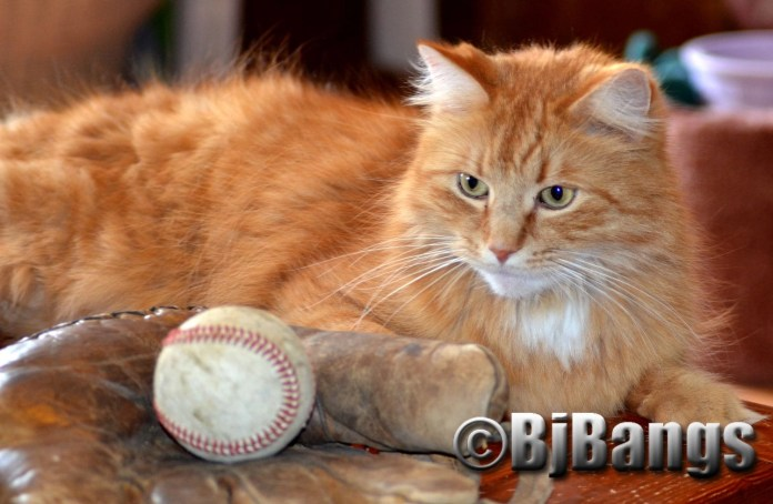 Kitty is ready for baseball's opening day