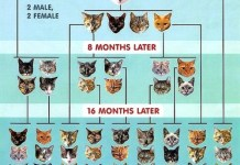 Cat pyramid, Cat overpopulation chart