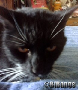 Very healthy senior cat