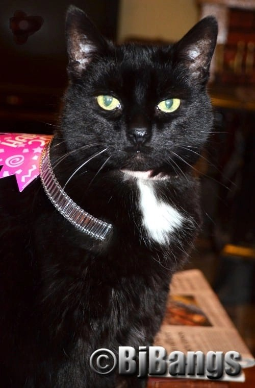 This lucky cat was rescued from a tree. Now much older she's much wiserNew Year's 2016 in style.