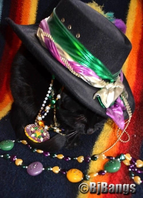 Cat celebrates Mardi Gras a little early and is a bit under the weather, or should we say hat.