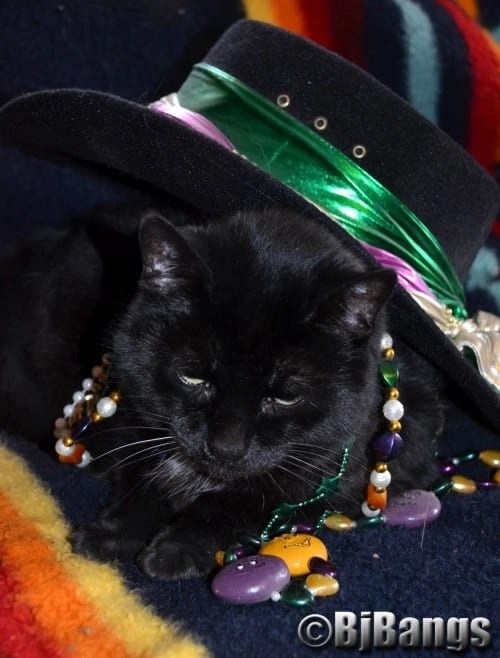 Cat Pink Collar takes out the beads and hat as she prepares for Mardi Gras