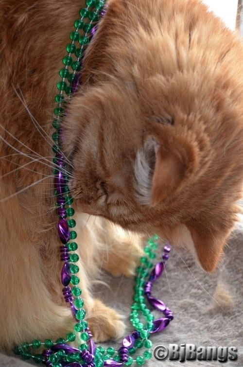 Paws' Little Yellow checks out his Mardi Gras beads and is ready to play or rather Pawty.