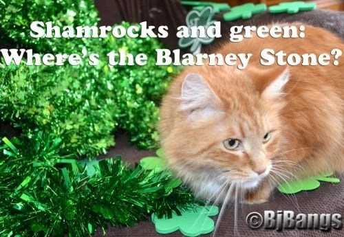 Cat Little Yellow looks for the Blarney Stone