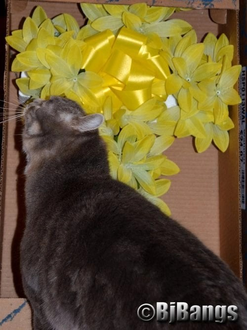 Cats check put flowers to be put on Memorial Day grave site.