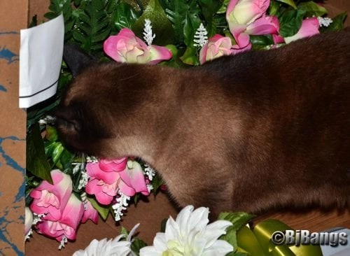 Cats like the idea of placing flowers on the family grave site on Memorial Day.