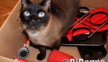 Cats check out swag from pet charity raffle