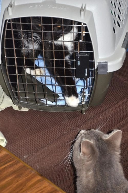 Pet remedy calmed my cats when going to the vet