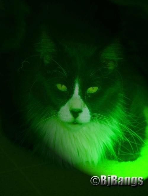Sunday Selfie: Neon Cat