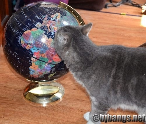 Kitty has the whole world in his paws on Earth Day