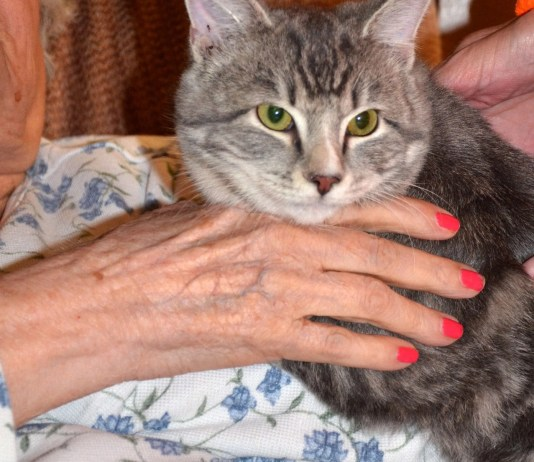 Cats make great therapy pets
