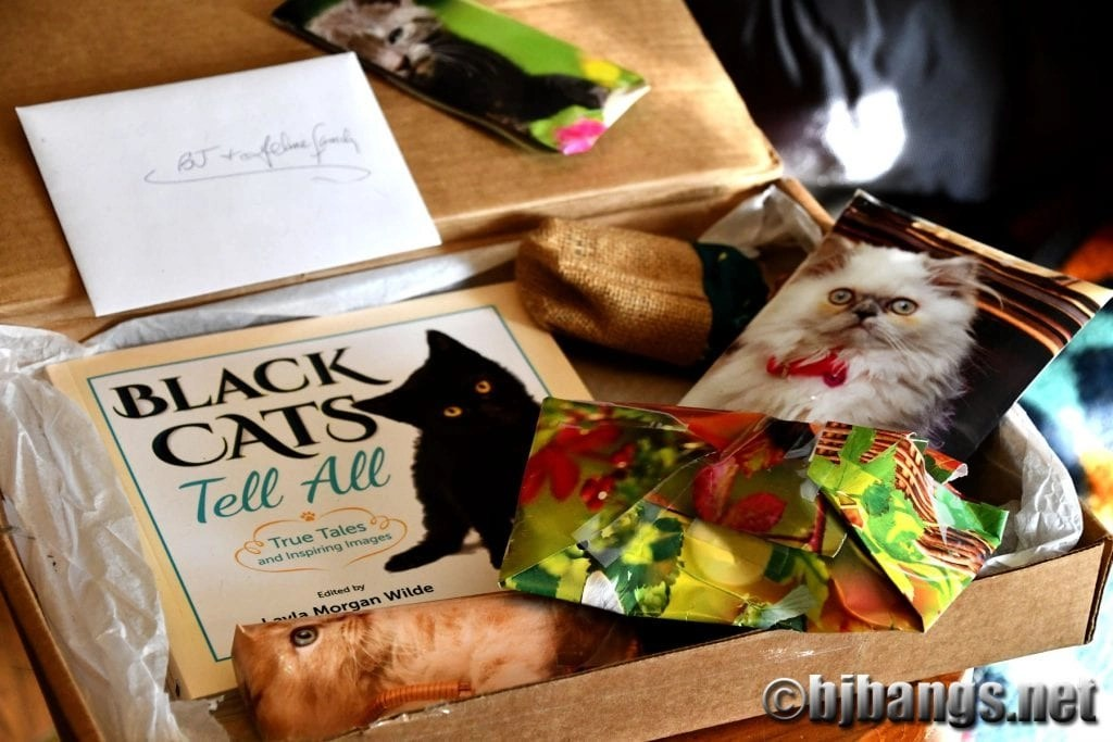 Secret Paws brings cats holiday joy