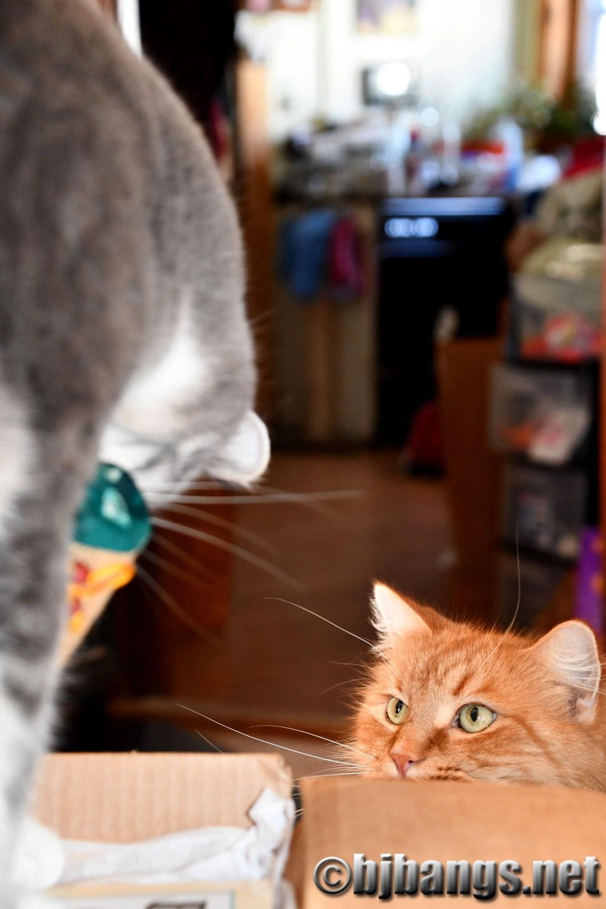 Secret Paws brings cats holiday joy