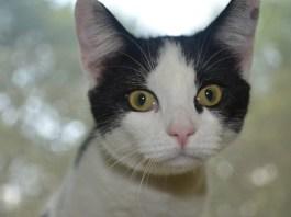 Save Kittens – Support the Kitten Bill