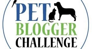 2019 Pet Blogger Challenge, time to refocus Paws for Reflection
