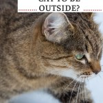 Pin of cat in snow showing when it is too cold to leave your cat outside.