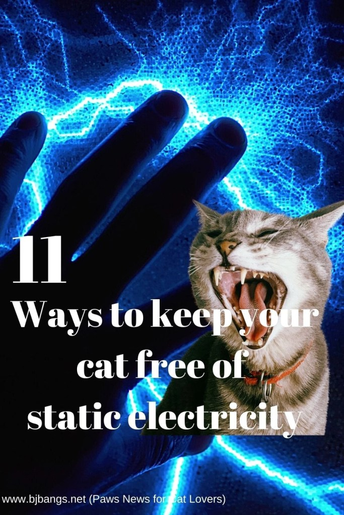 Photo of cat getting zapped by static elecricity as he explains 11 ways to keep your cat free of static electricity