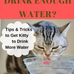 Pin of cat drinking water asking whether he drinks enough water every day.