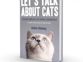 Let's Talk About Cats, a must-read book for all cat people