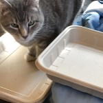 Lwnny checks out Emerging Green Disposable Cat Box