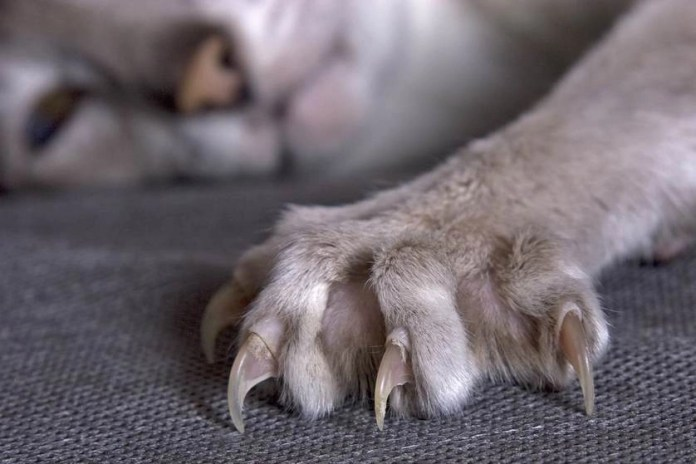 Trimming cats claws is one of the 15 ways to keep your cat from destroying your sofa