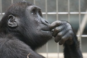 What you thinking about Monkey?