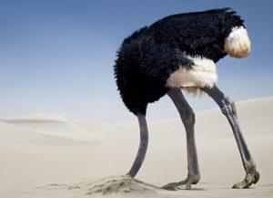 Ostrich Buried Head